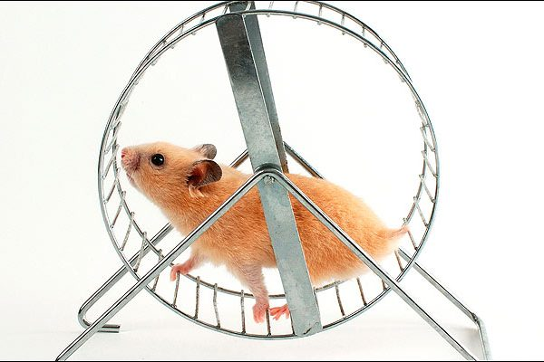 Tired of the WordPress Updates Hamster Wheel